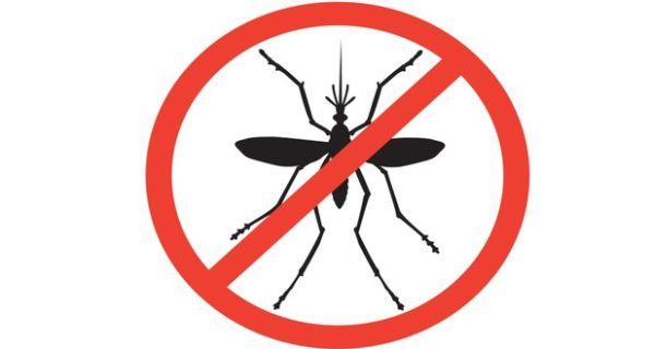 protect from dengue fever